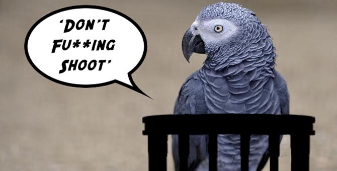 #अजब-गजब: जब मर्डर केस में गवाही देने कोर्ट पहुंचा तोता और फिर...